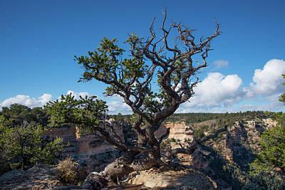 Photograph - Hardy Tree by Frank Madia