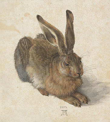 Hare Wall Art - Painting - Hare by Albrecht Durer