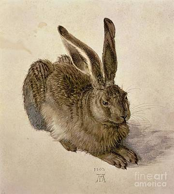 Wild Animal Painting - Hare by Albrecht Durer