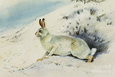 Hare Art Print by Archibald Thorburn