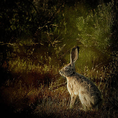 Photograph - Hare by Belinda Greb
