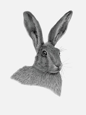 Drawing - Hare  by Claire Fagan