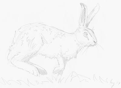 Drawing - Hare Drawing by Mike Jory