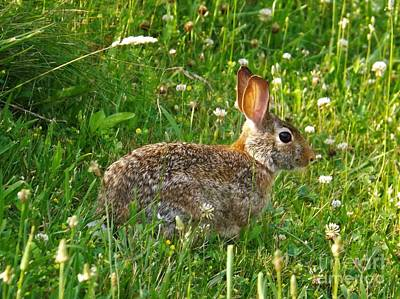 Photograph - Hare In The Grass by Sara Raber