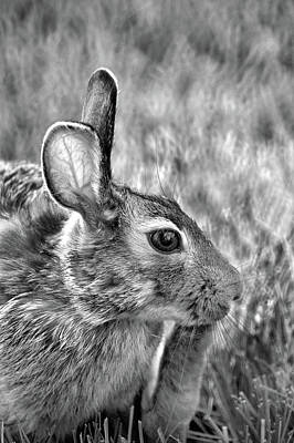 Photograph - Hare by Jamieson Brown