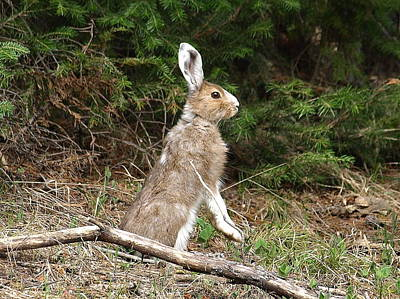 Photograph - Hare That by DeeLon Merritt