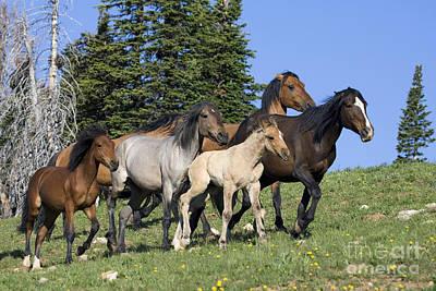Harem Of Mustangs Art Print by Jean-Louis Klein & Marie-Luce Hubert