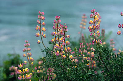 Point Lobos Photograph - Harlequins In Harmony by Kathy Yates