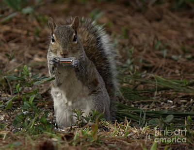 Photograph - Harmonica,dylan The Squirrel by Sandra Clark