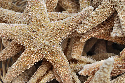 Photograph - Harmonious Starfish by JAMART Photography