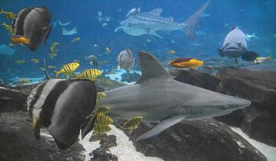 Hammerhead Shark Photograph - Harmony  by Betsy Knapp