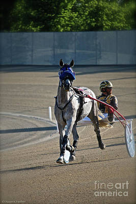 Photograph - Harness Racing by Susan Herber