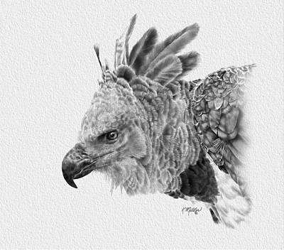 Drawing - Harpy Eagle by Kathie Miller