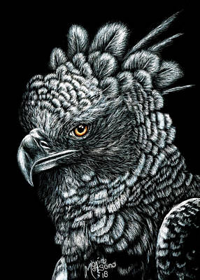 Drawing - Harpy Eagle by Monique Morin Matson