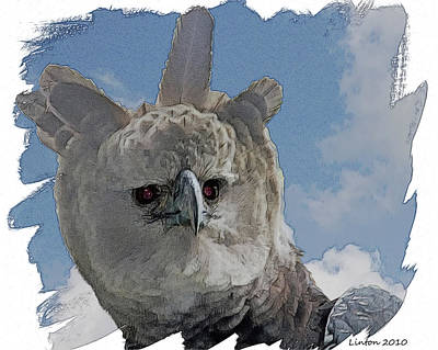 Harpy Eagle Digital Art - Harpy Eagle Portrait by Larry Linton