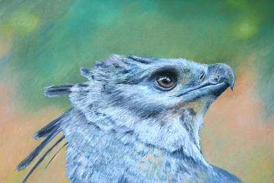 Art Print featuring the painting Harpy Eagle Two by Ceci Watson