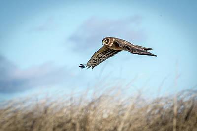 Photograph - Harrier In Flight by Paul Treseler