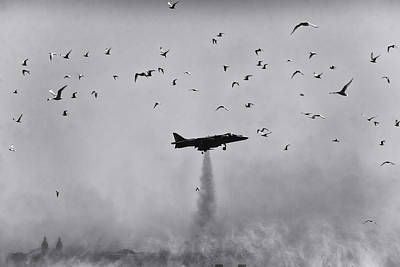 Photograph - Harrier With Birds by David April