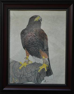 Drawing - Harris Hawk by Benoit Charron