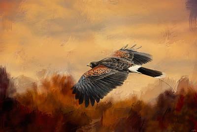 Harris Hawk Photograph - Harris Hawk In Autumn by Jai Johnson