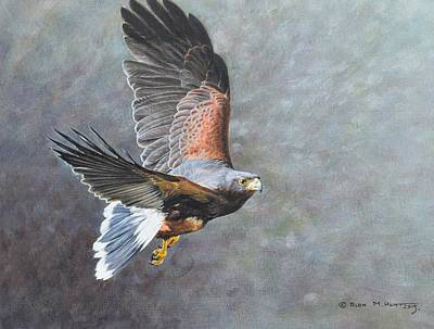 Painting - Harris Hawk In Flight by Alan M Hunt