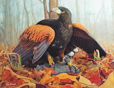 Harris Hawk  Art Print by Ken Everett