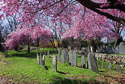 Photograph - Harris Street Cemetery Cherry Blossom Tree Marblehead Ma North Shore by Toby McGuire