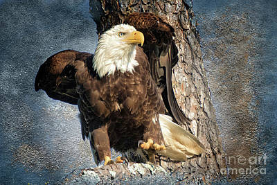Photograph - Harrison Eagle by Geraldine DeBoer
