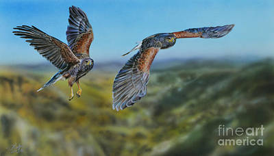 Painting - Harris's Hawks by Lachri