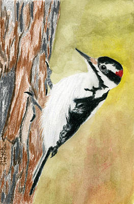 Harry The Hairy Woodpecker Art Print