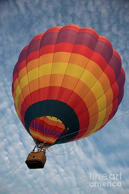Photograph - Harvard Balloon Fest 4 by David Bearden