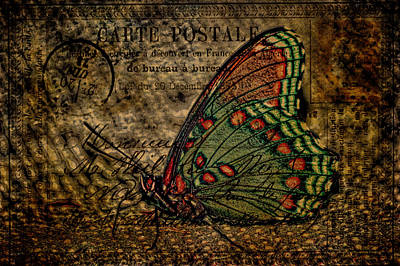 Photograph - Harvest Butterfly Postcard Art by Lesa Fine