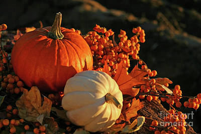 November Photograph - Harvest Colors by Sandra Cunningham