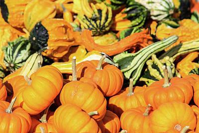 Photograph - Harvest Gourds by Bonnie Follett