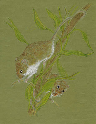 Drawing - Harvest Mice by Stephanie Grant