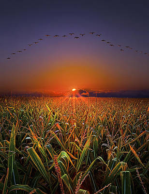 Natur Photograph - Harvest Migration by Phil Koch