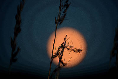 Photograph - Harvest Moon by Anne Mott