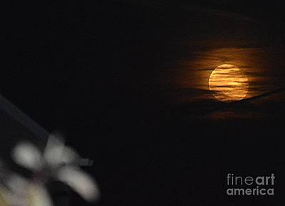 Photograph - Harvest Moon by Brigitte Emme