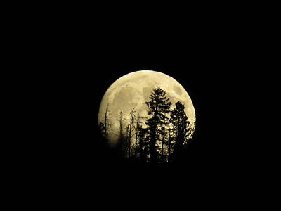 Photograph - Harvest Moon by Karen Shackles