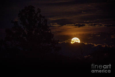 Photograph - Harvest Moon Rise by Cheryl Baxter
