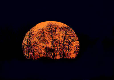 Photograph - Harvest  Moon Rising by William Jobes