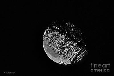 Photograph - Harvest Moon by Shelia Kempf