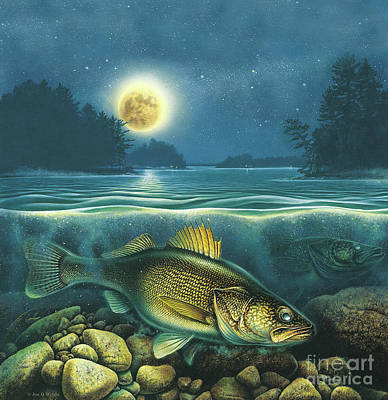 Harvest Moon Walleye 3 Square Shape Art Print by Jon Wright