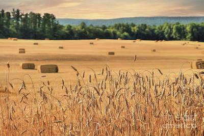Bale Digital Art - Harvest Of Gold by Lori Deiter