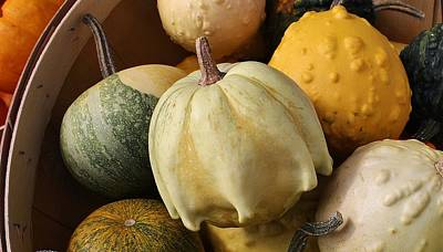 Oregon Illinois Photograph - Harvest Of Gourds by Bruce Bley