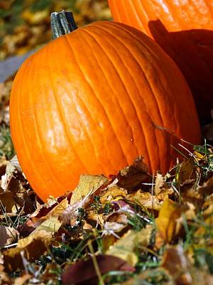Photograph - Harvest Pumpkin by Kyle West