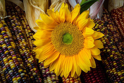Indian Corn Wall Art - Photograph - Harvest Sunflower by Garry Gay