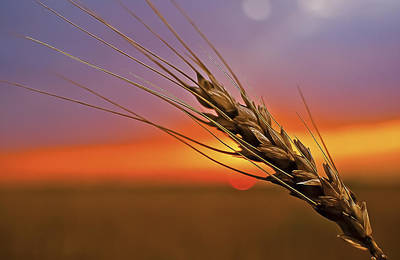 Photograph - Harvest Sunset by Garett Gabriel