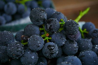 Concord Grapes Photograph - Harvest Time by Amanda Jones