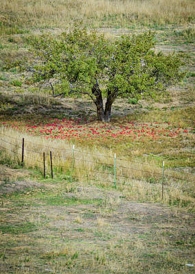 Photograph - Harvest Time For Julian Apples by Alexander Kunz